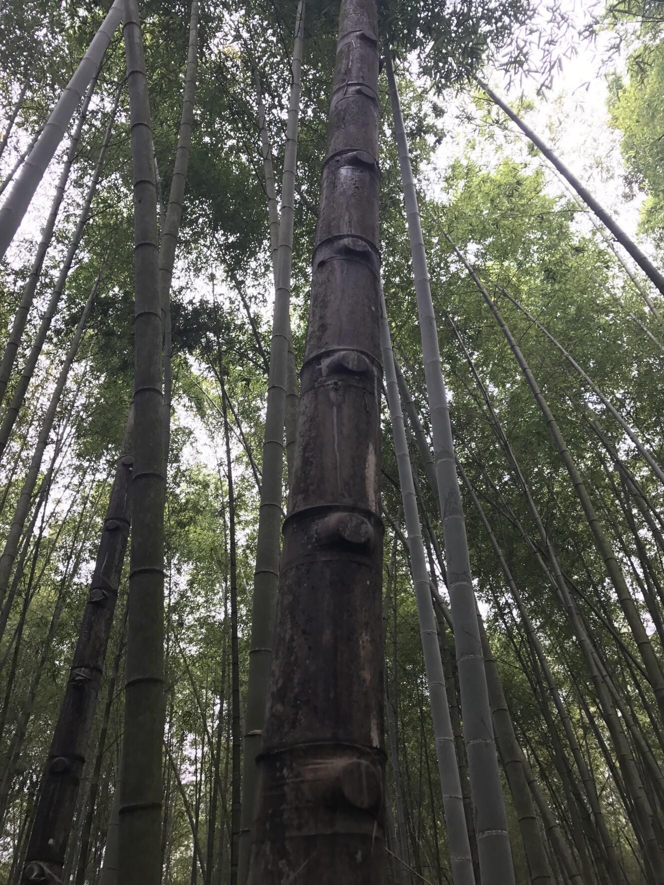 森呼吸 人文生態探索之旅兩日3680元起